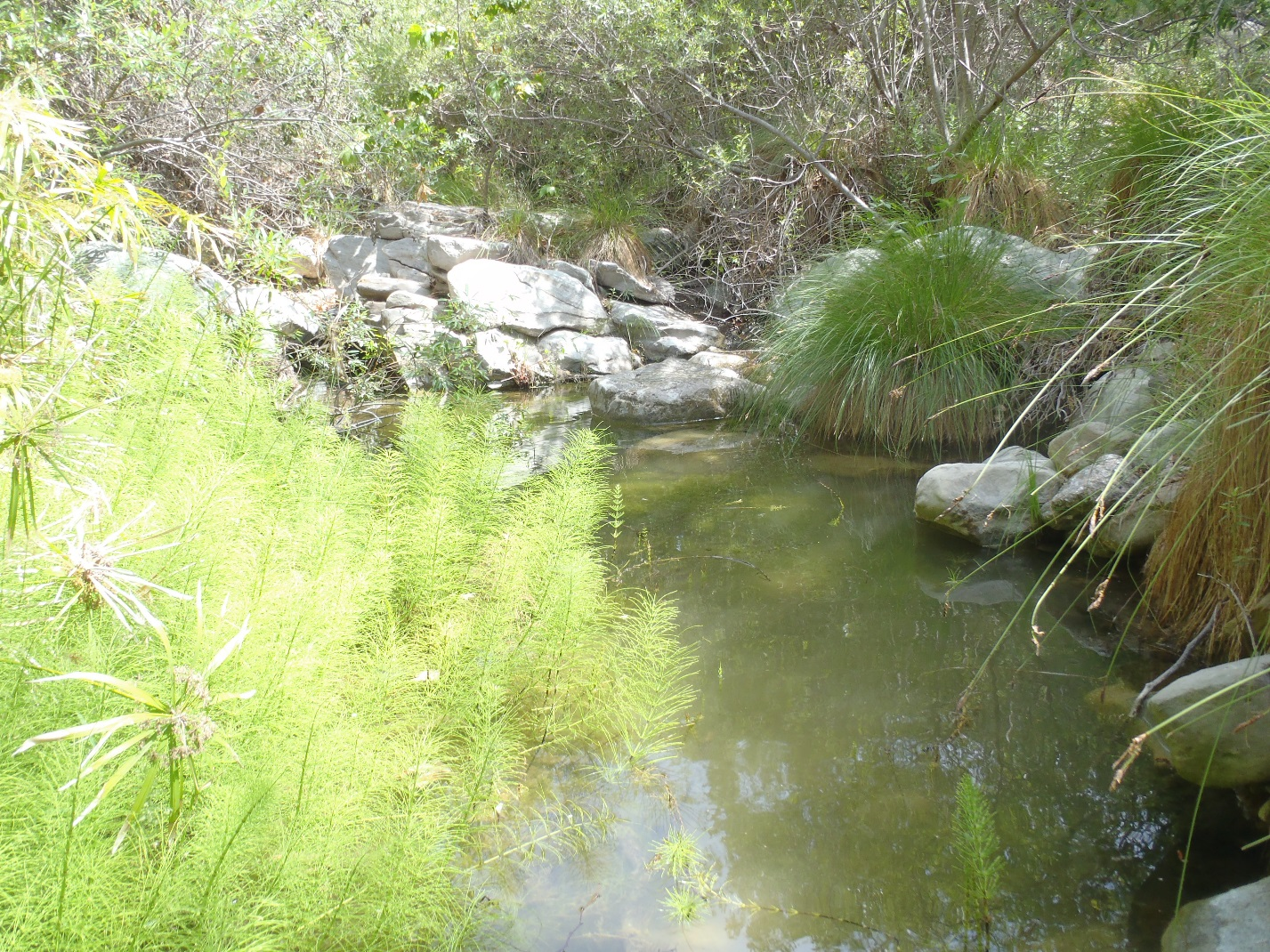 Arroyo Sequit Creek - The Bay Foundation